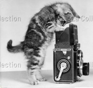 Chaton jouant avec une caméra. Vers 1955. Photographie. Collection particulière.