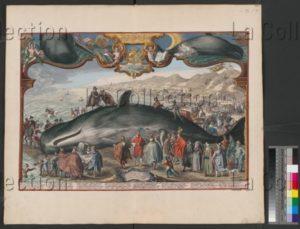 Baleine échouée à Beverwijk le 20 décembre 1601. Gravure. Vienne, Österreichische Nationalbibliothek.