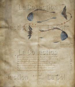 "Art carolingien. ""Phaenomena"" (""Les Phénomènes"", Aratos de Soles). La constellation des Poissons. IXe siècle. Manuscrit. Londres, British Library."