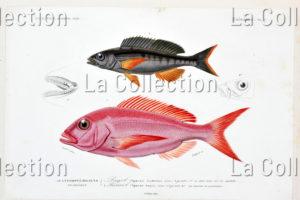 France. Sciences naturelles. Zoologie. 1841 1849. Gravure. Collection particulière.