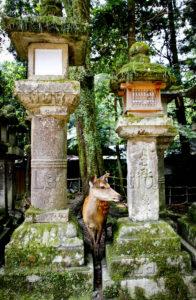 Maufroid, Caroline. Nara. Sanctuaire de Kasuga-taisha. 2017. Photographie. Collection particulière.