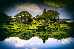 Maufroid, Caroline. Tokyo, Jardin impérial. 2017. Photographie. Collection particulière.