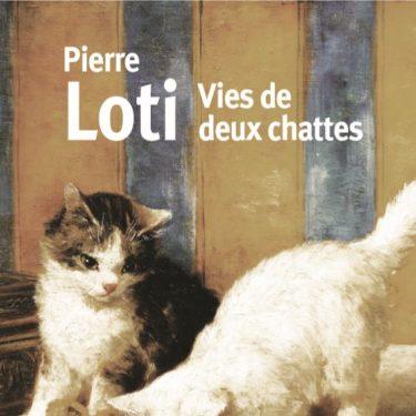 loti - Vies de deux chattes
