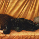 Burne-Jones, Sir Edward. Portrait de Katie Lewis. 1886. Peinture. Collection particulière.